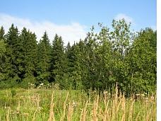 Участок  8 соток на лесной опушке