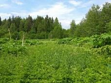 Участок  20 сот пос. Поляны в лесу