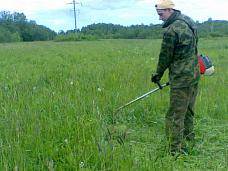 Участок  вблизи деревни Пчёвжа