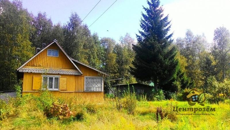 Ломоносовский район кедр дача