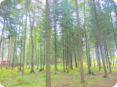 Лесной  участок у реки. 20 соток.