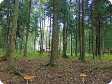 Лесной  участок у реки.34 сотки
