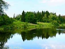 Участок  у леса