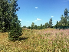 Продажа  земельного участка в Быково