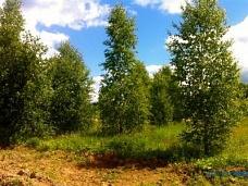 Участок  в КП Лесной пейзаж