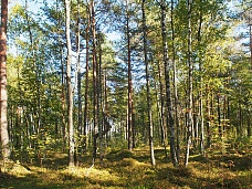 Участок  в Зеленогорске +10 км.